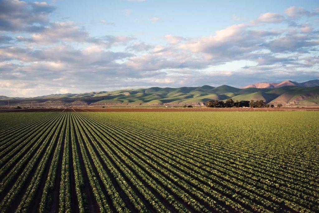 champs culture agrivoltaïsme