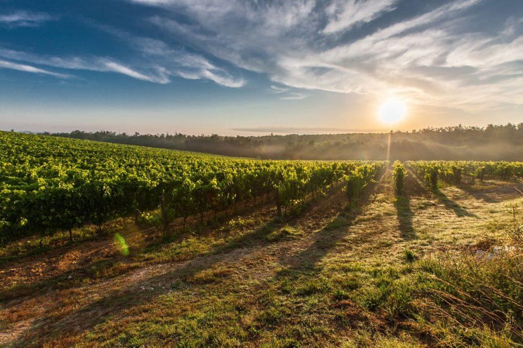 vignes panneaux solaires agrivoltaïsme