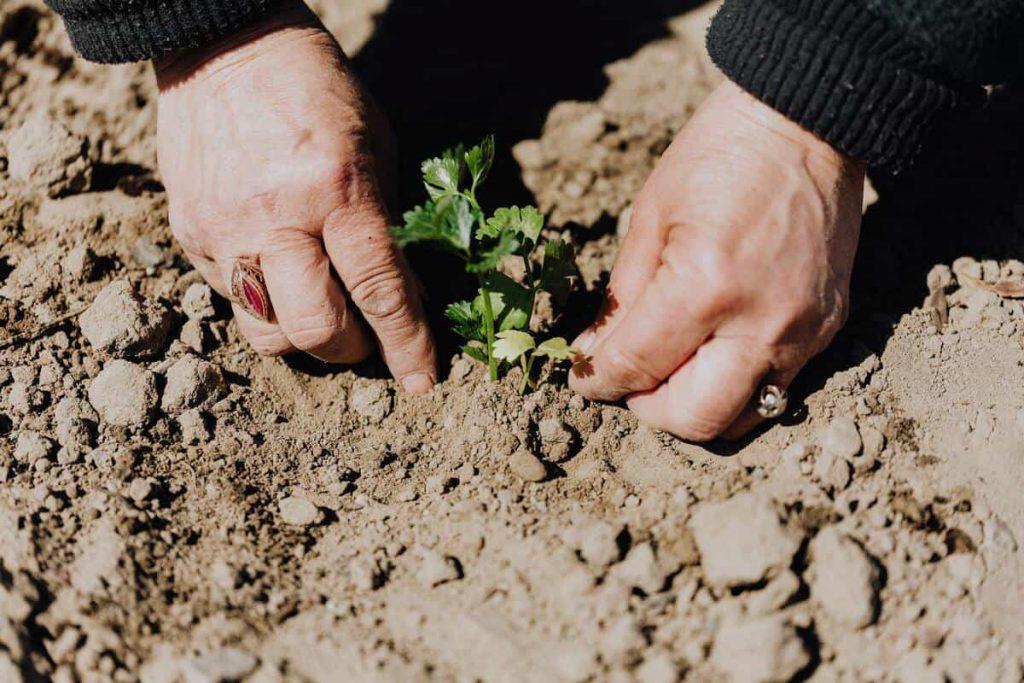 Jardin écoresponsable sol